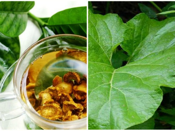 Неплохие результаты показывает употребления чая из крапивы и лопуха