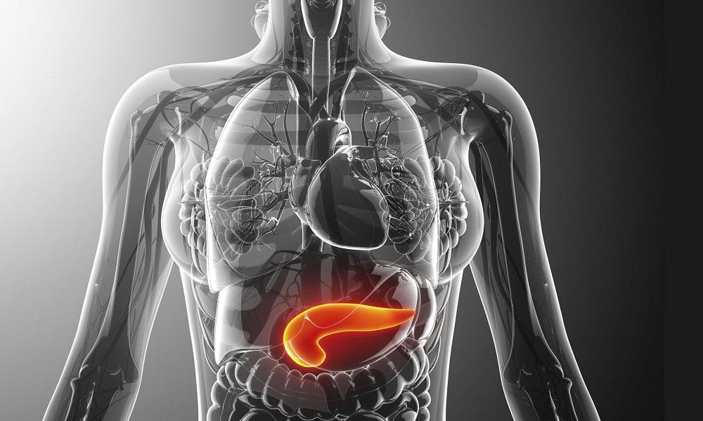 При заболеваниях поджелудочной железы барсучий жир противопоказан