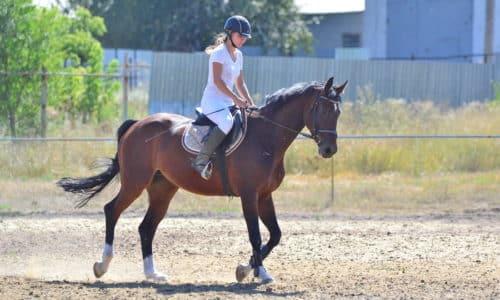 При геморрое не рекомендован конный спорт из-за возникающей тепловой прослойки между спортсменом и лошадью