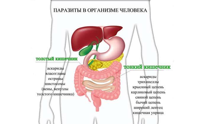Уничтожение полезной микрофлоры и механические повреждения слизистой оболочки приводят к развитию гастрита и язвы. ЖКТ претерпевает патологические изменения