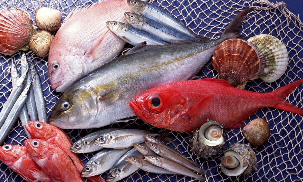 Рыба предпочтительна нежирных сортов