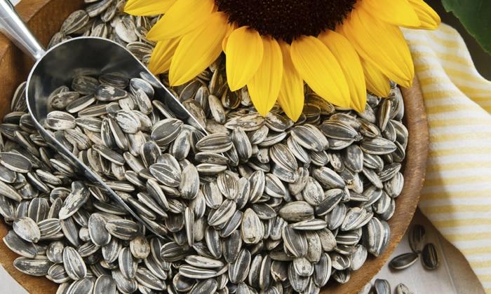 Семена подсолнечника при геморрое не менее полезны, чем тыквенные, - в них содержится еще больше витаминов и жизненно важных жирных кислот