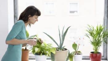5 домашних растений, которые лучше всего очищают воздух в квартире